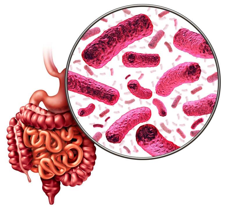 Unser intestinales Mikrobiom umfasst etwa 100 Billionen Bakterien